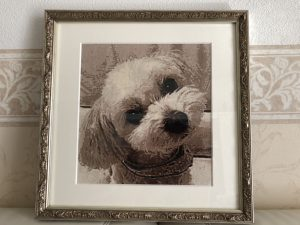 クロスステッチ,フォトクロスステッチ,みのり工房,写真から,犬,わんこ