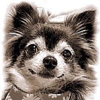 クロスステッチ,フォトクロスステッチ,みのり工房,イヌ,犬,いぬ,dog,クロスステッチ